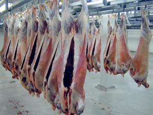 Export lamb carcasses at Alliance plant, Mataura PHOTO: NEAL WALLACE